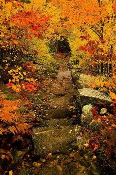 Beautiful fall foliage in Acadia National Park, Maine Foto Nature, All Nature, Beautiful World, Beautiful Places, Beautiful Pictures, Nice Photos, Belle Photo, The Places Youll Go, The Great Outdoors