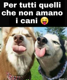 Large Animals, Animals And Pets, Funny Animals, Cute Animals, Beautiful Dogs, Animals Beautiful, Dog Pictures, Funny Pictures, Italian Memes