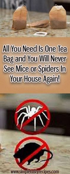 All You Need Is One Tea Bag And You Will Never See Mice Or Spiders In Your House Again! #AllYouNeedIsOneTeaBagAndYouWillNeverSeeMiceOrSpidersInYourHouseAgain!
