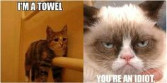 @Emily Eddington Sharing this with you, because I know you like the grumpy cat, too!