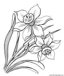 magnolia fleur dessin - Recherche Google