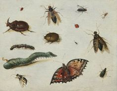 Jan van Kessel l'Ancien (1626-1679), Insectes; Panneau, 13x16,5 cm | Fondation Custodia