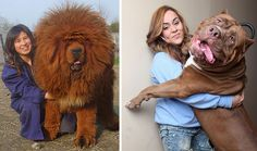 20+ Dogs Who Don't Understand How BIG They Are