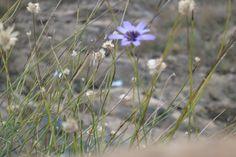 Blume im Hohen Atlas
