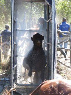 Home - Spray Race Africa - Orange_Orange Orange Orange, Livestock, Bee, Africa, Racing, Dogs, Animals, Animaux, Auto Racing