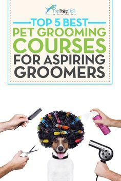 """Best Dog Grooming Courses Online. Do you groom your own dogs, or find yourself pulling out the scissors after your dog's trip to the grooming salon to """"get the job done right""""? Do your friends and family ask you to trim their dogs' fur because you are so good at it? Have you thought about maybe making this talent a side hustle, or even a full time business? These best dog grooming courses online can help get you started! #dogs #grooming #pets"""