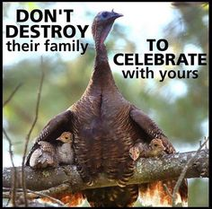 Have a Happy, we mean, a Compassionate Thanksgiving everyone. Vegan Memes, Vegan Quotes, Animal Quotes, Save Animals Quotes, Animal Rights Quotes, Why Vegan, Vegan Animals, Farm Animals, Stop Animal Cruelty