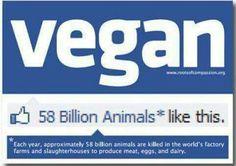 roots of compassion veganer & kollektiver Onlineshop
