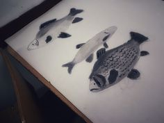 #fish #drawing #hungarigirl