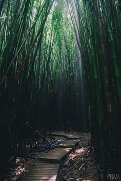 Pipiwai Trail to Waimoku Falls, Hawaii  By DAVID CHATSUTHIPHAN   ..rh