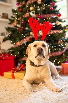 Le più belle immagini di Natale da condividere