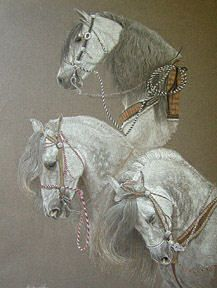 Caballeros Andalusian — 20 x 16, Colored Pencil, by Shirley Isola. First place at the 2006 Draft Horse Classic.