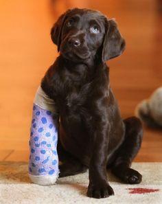 Cutest broken leg you'll ever see