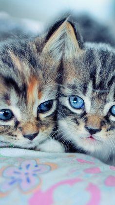 kittens couple down cute
