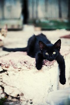 By Annika Svenmarck.  Beautiful black cat