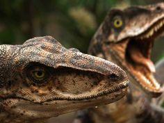 Jurassic World: ¿Qué tipo de dinosaurio eres? (Test de personalidad | Quiz online español | Juegos de preguntas)