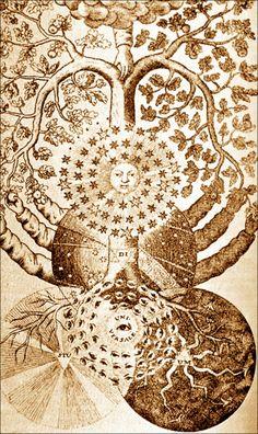Tree of dark and light from Valentine Weigel Studium Universale, / Sacred Geometry Illustration Photo, Pencil Illustration, Technical Illustration, Tree Of Life Art, Tree Art, Tree Of Life Meaning, Tarot, Arte Tribal, Spiritus