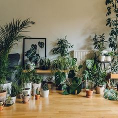 We have decided that maybe we have a few too many plants right now but it's difficult not to bring more into the house...we should probably gift some to make more room. - - - #Haarkon #HaarkonHouse #plant #plants #houseplants #indoorplants #monstera #instaplant #plantstagram #plantsofinstagram #houseplantsofinstagram #plantsarefriends #plantlife #plantlove #botanical #botanicalpickmeup #botanicalstyling #indoorgarden #indoorgardening #cacti #cactus