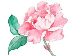 """Check out new work on my @Behance portfolio: """"pink  peony in chinoiserie style"""" http://on.be.net/1NdJR3R"""