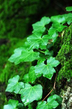 Quelles plantes choisir quand on n'a pas la main verte