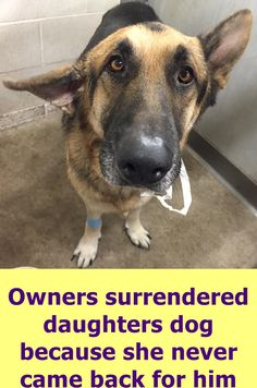 Available NOW SARGE ID #A498858 Friendly male German Shepherd approximately 3 years old. . San Bernardino City Shelter , CA doesn't have many networkers, we really need your help sharing our dogs . The local rescues full and hwe're in big trouble ! San Bernardino City Animal Shelter 333 Chandler Place, San Bernardino, CA https://www.facebook.com/298927593559439/photos/pb.298927593559439.-2207520000.1477059748./1099374463514744/?type=3&theater