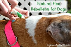 Natural Flea Repellents for Dogs #PawNatural