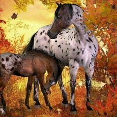 Picture perfect Appaloosa mare and foal in Autumn trees.