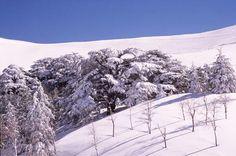 Lebanese Mountains