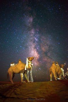 Camel's Dream