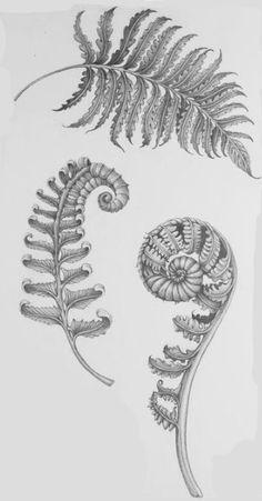 Botanical Illustration, Botanical Art, Girl Face Tattoo, Nature Tattoos, Cover Tattoo, Chest Tattoo, Crayon, Tattoo Sketches, Beautiful Tattoos