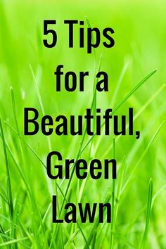 The grass doesn't have to be greener on the other side of the fence! 5 Tips for a Beautiful, Green Lawn