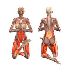 ૐ YOGA ૐ Vatayanasana ૐ Cara de Caballo pie Derecho - Horse face pose right - Vatayanasana right - Yoga Poses | YOGA.com