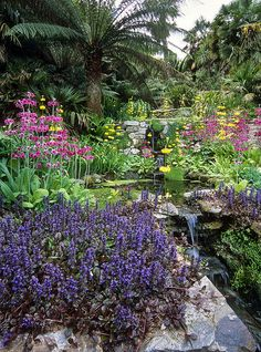 Water in English Gardens (16 of 33) | Stream-side Planting,Trebah Gardens, Cornwall, England | Flickr - Photo Sharing!