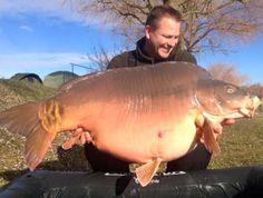 Na stronie łowiska Euro Aqua pojawiła się informacje, że wczoraj na węgierskim łowisku Euro Aqua został złowiony karp o wadze 40,9 kg. Łowcą okazu jest Frank Schmidt. Frank powiedział że jest to jego pierwszy karp o masie powyżej 40 kg z tego łowiska. Dodamy jeszcze że obecny rekord łowiska Euro Aqua to karp o wadze 46,1 kg, którego złowił Roman Hanke. http://karpiarstwo.pl/poczatek-roku-i-kolejny-duzy-karp-tym-razem-o-wadze-409-kg-z-wegier/