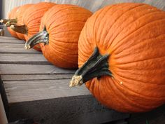 Pumpkins in October: autumn archetype Early Autumn, Samhain, Pumpkins, Harvest, October, Pumpkin, Squash, Early Fall