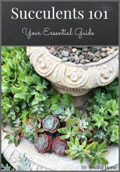 Succulents your guide to these beautiful, hardy, drought tolerant, multiplying gems of the garden.  Way beyond the cactus! Come learn & look at all the pretty choices in the world of succulents.