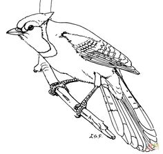 Blue Jay Coloring Page From Category Select 28148 Printable Crafts Of Cartoons Nature Animals Bible And Many More