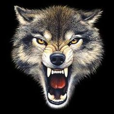 Wolf Snarling Face Gallery for > <b>wolf snarling face</b> Wolf Tattoos, Wolf Face Tattoo, Wolf Tattoo Sleeve, Animal Tattoos, Wolf Growling, Snarling Wolf, Wolf Hybrid, Angry Wolf, Wolf Artwork