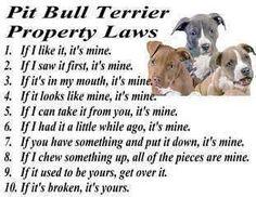 Pit bull rules