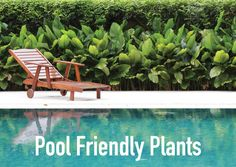 What To Plant Around A Swimming Pool - Albatross Swimming Pools Plants Around Pool, Landscaping Around Pool, Pool Plants, Landscaping Melbourne, Tropical Landscaping, Indoor Plants, Swimming Pool Construction, Garden Screening, House Landscape