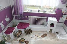 Purple bunny play area!