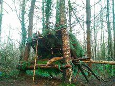 kevin langan, survival shelter, scotland, natural resources, 100 wild huts, hut, blog, pine