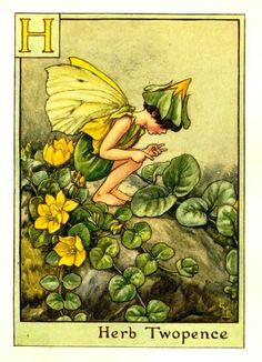 H ~ Herb Twopence Fairy ~ Government and virtues. Venus owns it. Herb Twopence is singularly good to stay all fluxes in man or woman, whether they be lasks, bloody-fluxes, bleeding inwardly or outwardly, or the weakness of the stomach that is given to casting...For all which purposes the juice of the herb, or the powder drank in water wherein hot steel hath been often quenched... or to have tents dipped therein and put into them, are effectual. ~Culpepper's Complete Herbal