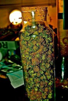 ::purp skurp::weed::ganja::kush in the ash tray::marijuana::pot::purple weed::THC:: cannabis::NoEllie0123