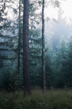 "90377:  "" Green and beautiful by Robert-Paul Jansen  """