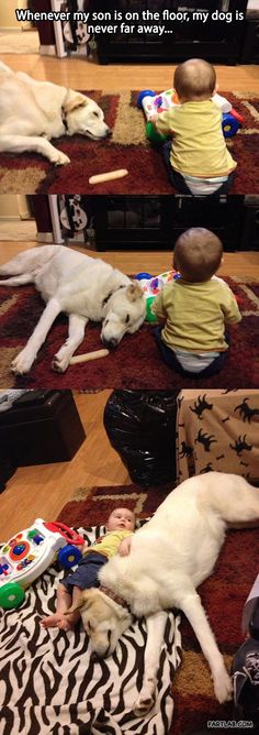 "Aww, I love it when dogs ""adopt"" human kids, lol"