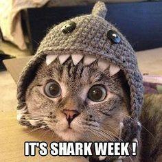 The Internet's Funniest #SHARKWEEK Memes!