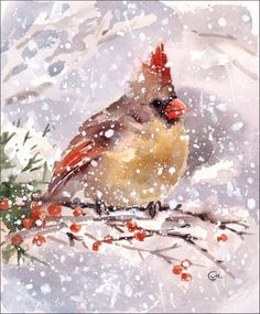 Cardinal Watercolor - lots of things to learn here!                                                                                                                                                     More
