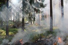 Leśnicy włączyli się w kampanię społeczną STOP pożarom traw. Inauguracja akcji na Mazowszu odbyła się 21 marca na Zamku Szydłowieckim. Leśnicy rozpoczęli także akcję bezpośrednią w ochronie przeciwpożarowej lasów.