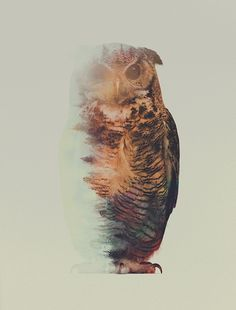 Portraits d'animaux en double exposition Portraits En Double Exposition, Tatoo Art, Owl Canvas, Double Exposure Photography, Norwegian Wood, Illustration Art, Illustrations, Owl Art, Animal Tattoos